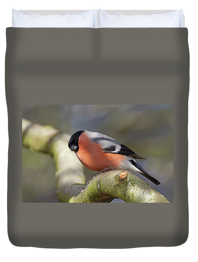 Birds Duvet Cover featuring the photograph Bullfinch by Bob Kemp