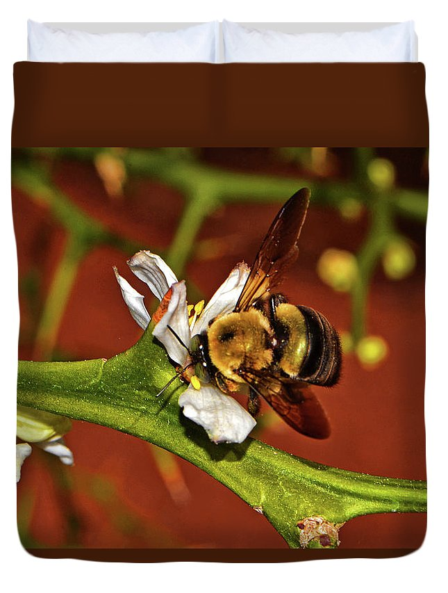 Bee Duvet Cover featuring the photograph Bumblebee On A Hardy Orange Blossom 002 by George Bostian