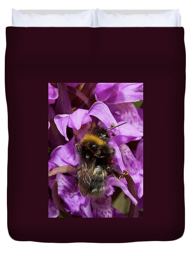 Plants Duvet Cover featuring the photograph Bumblebee On Orchid by Bob Kemp