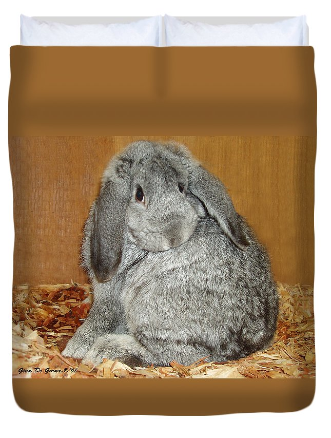 Bunny Duvet Cover featuring the photograph Bunny by Gina De Gorna