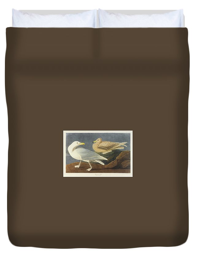 John James Audubon (after) Burgomaster Gull (plate Cccxcvi) Duvet Cover featuring the painting Burgomaster Gull by MotionAge Designs