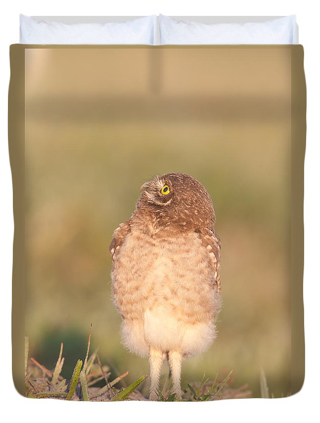 Clarence Holmes Duvet Cover featuring the photograph Burrowing Owl Fledgling II by Clarence Holmes
