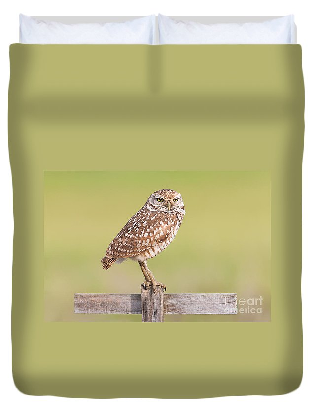 Clarence Holmes Duvet Cover featuring the photograph Burrowing Owl IIi by Clarence Holmes