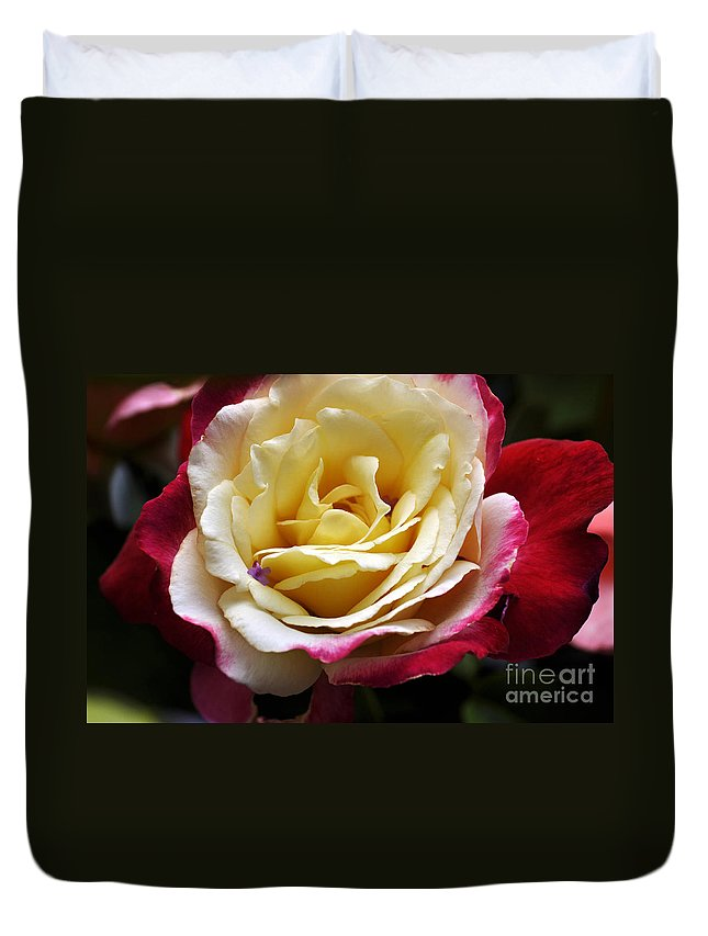 Clay Duvet Cover featuring the photograph Burst Of Rose by Clayton Bruster