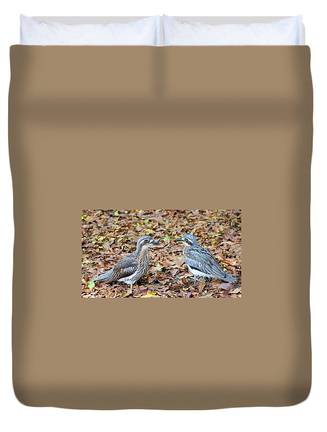 Curlew Duvet Cover featuring the photograph Bush Stone Curlew Pair by Mike Dawson