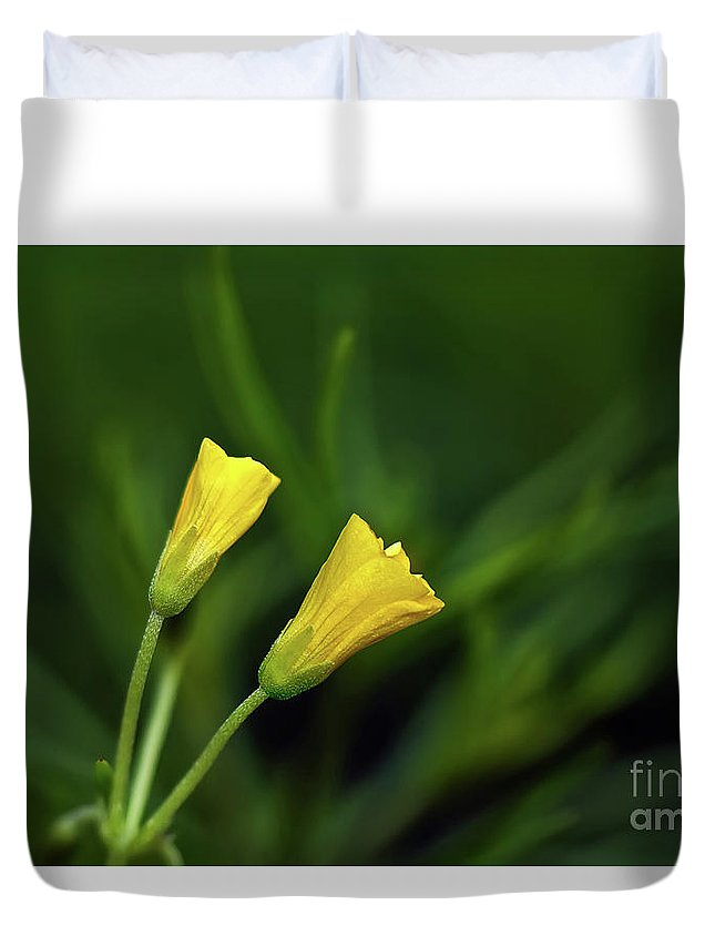 Buttercup Duvet Cover featuring the photograph Buttercup Babies by Lois Bryan