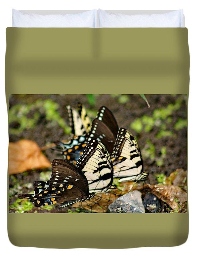 Butterflies Duvet Cover featuring the photograph Butterflies by Benjamin Hoffman