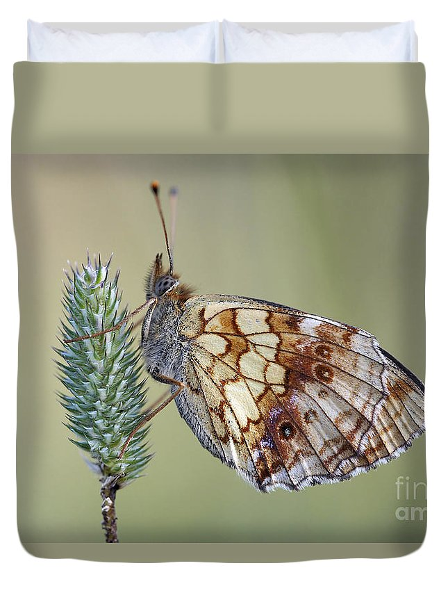 Macro Duvet Cover featuring the photograph Butterfly - Meadow Satyrid by Michal Boubin