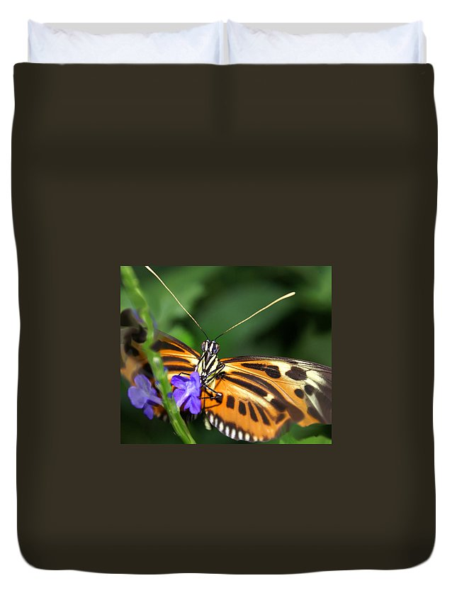 Butterfly Duvet Cover featuring the photograph Butterfly 2 Eucides Isabella by Heather Coen