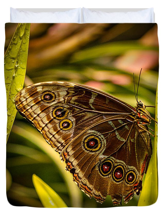 Butterfly Duvet Cover featuring the photograph Butterfly 25 by Larry White