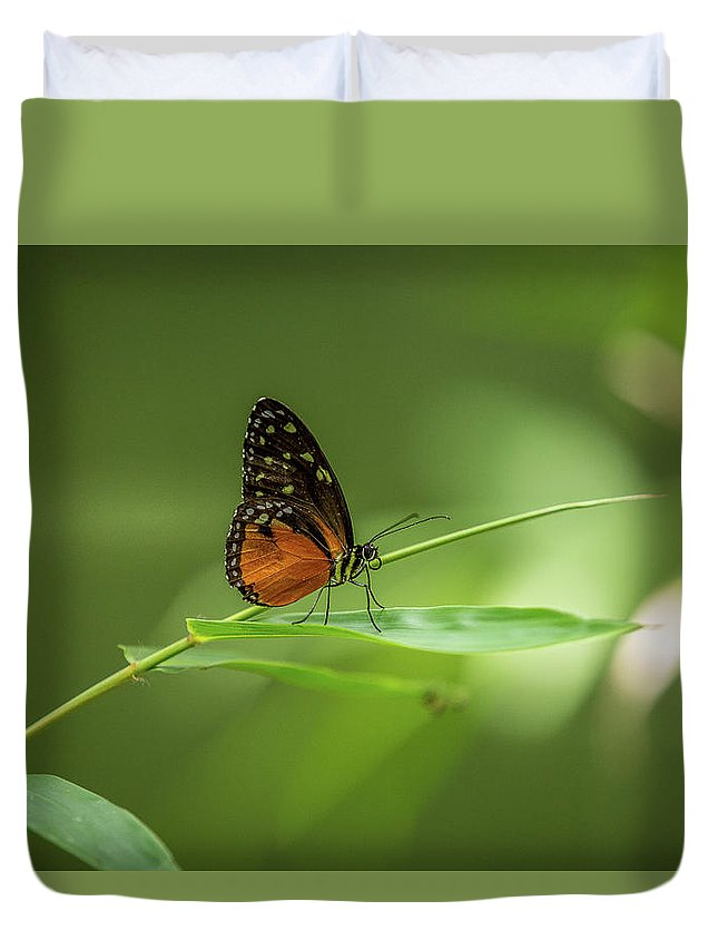 Butterfly Duvet Cover featuring the photograph Golden Helicon Butterfly by Jimmy Tran