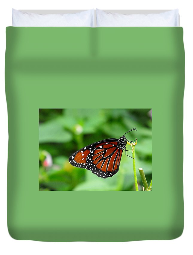 Butterfly Duvet Cover featuring the photograph Butterfly by Nora Martinez