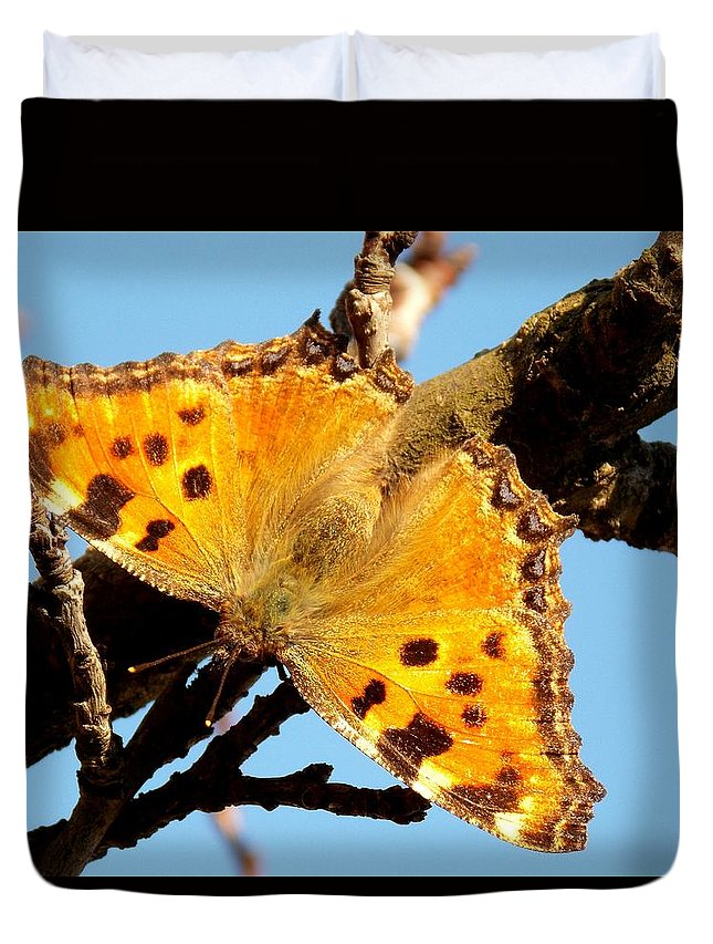 Animal Duvet Cover featuring the photograph Butterfly by Olja Simovic