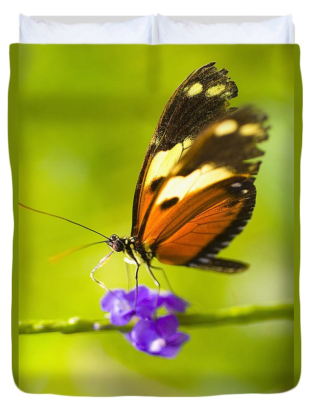 Afternoon Duvet Cover featuring the photograph Butterfly On Flower by Tomas del Amo - Printscapes