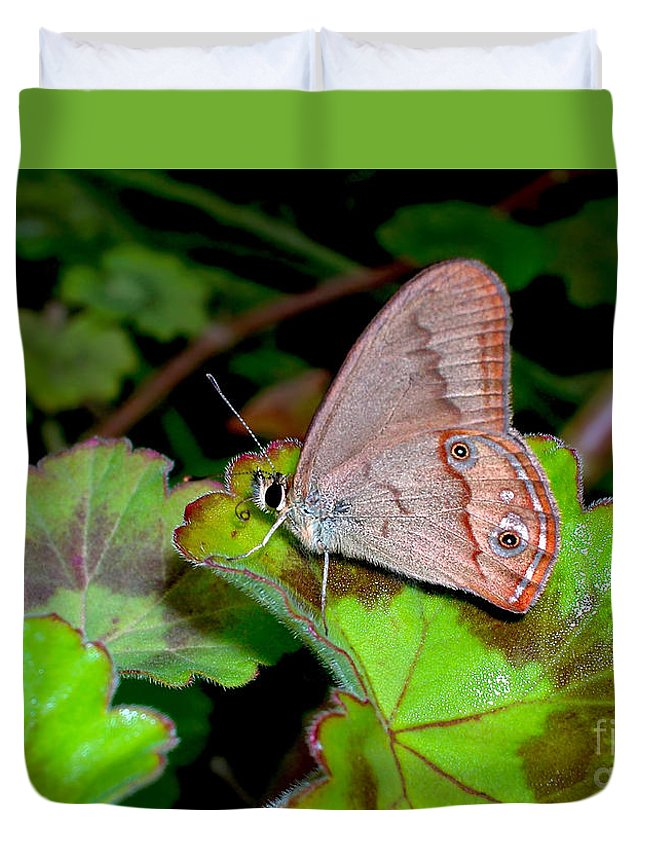 Photography Duvet Cover featuring the photograph Butterfly On Geranium Leaf by Kaye Menner