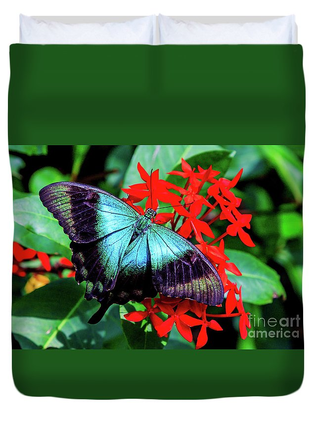 Bug Duvet Cover featuring the photograph Butterfly by Ray Shiu