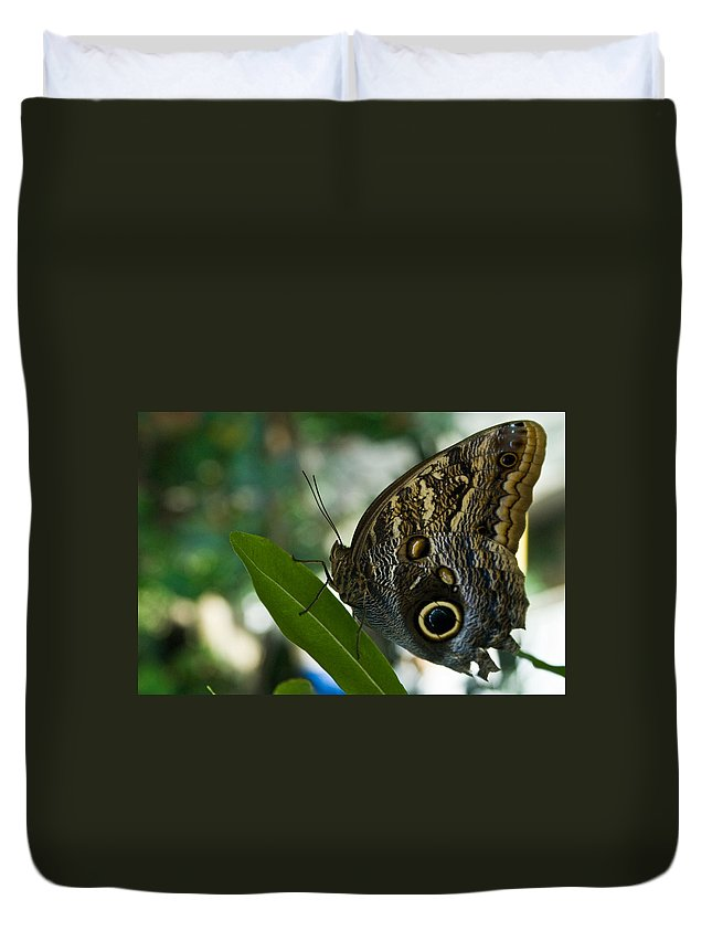 Butterfly Duvet Cover featuring the photograph Butterfly Sitting by Douglas Barnett