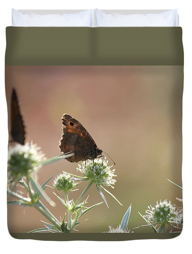 Butterfly Duvet Cover featuring the photograph Butterfly Spring Nature Morning Scene by Goce Risteski