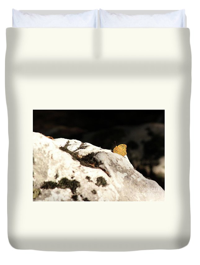 Butterfly Duvet Cover featuring the photograph Butterfly Standing On Rock by Goce Risteski