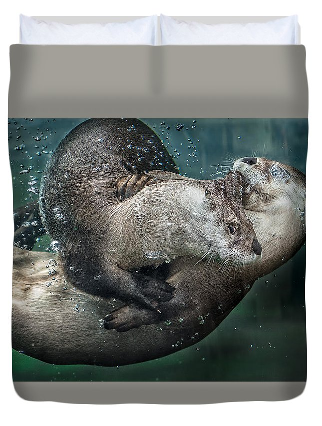 Otters Duvet Cover featuring the photograph By The Skin In His Teeth by Greg Nyquist