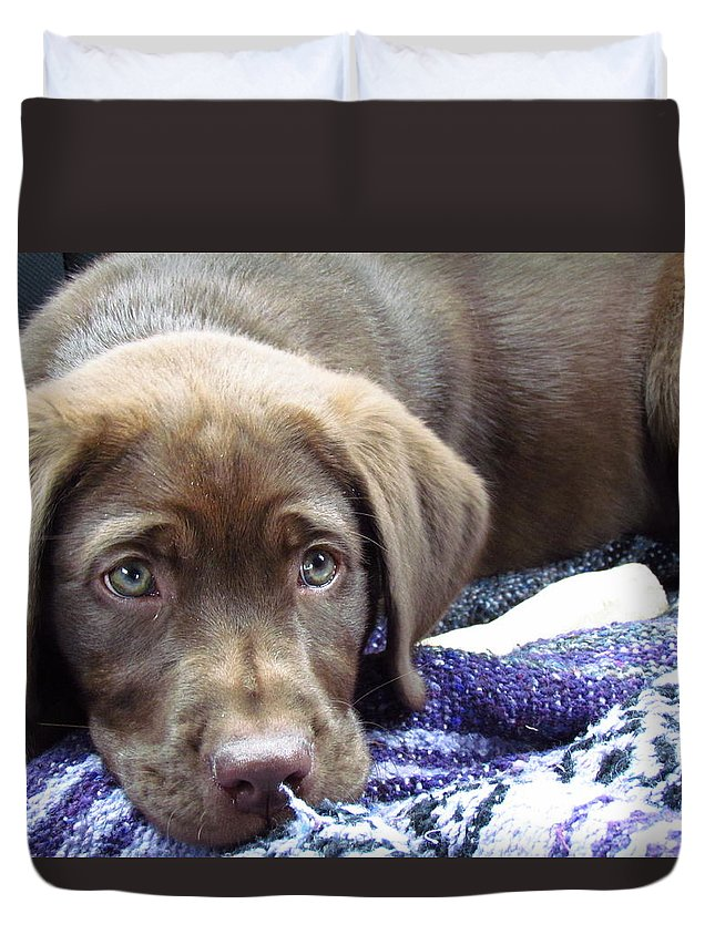 Chocolate Duvet Cover featuring the photograph Cabella by Shelley Wilson