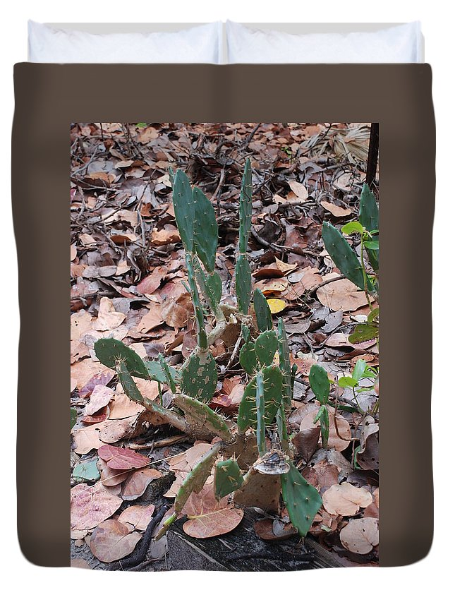 Cacti Duvet Cover featuring the photograph Cacti And Leaves by Rob Hans