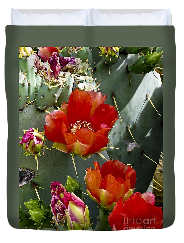 Arizona Duvet Cover featuring the photograph Cactus Blossom by Kathy McClure