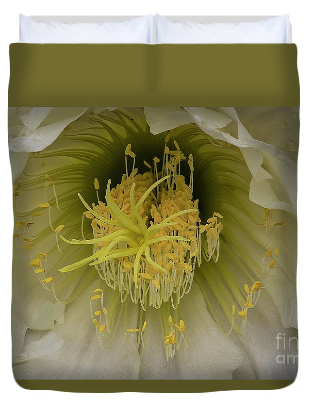 Desert Flower Duvet Cover featuring the photograph Cactus Flower Macro by Mitch Shindelbower