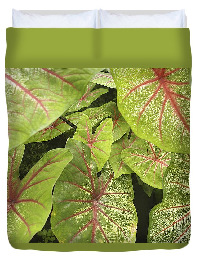 66-csm0195 Duvet Cover featuring the photograph Caladium Leaves by Ron Dahlquist - Printscapes