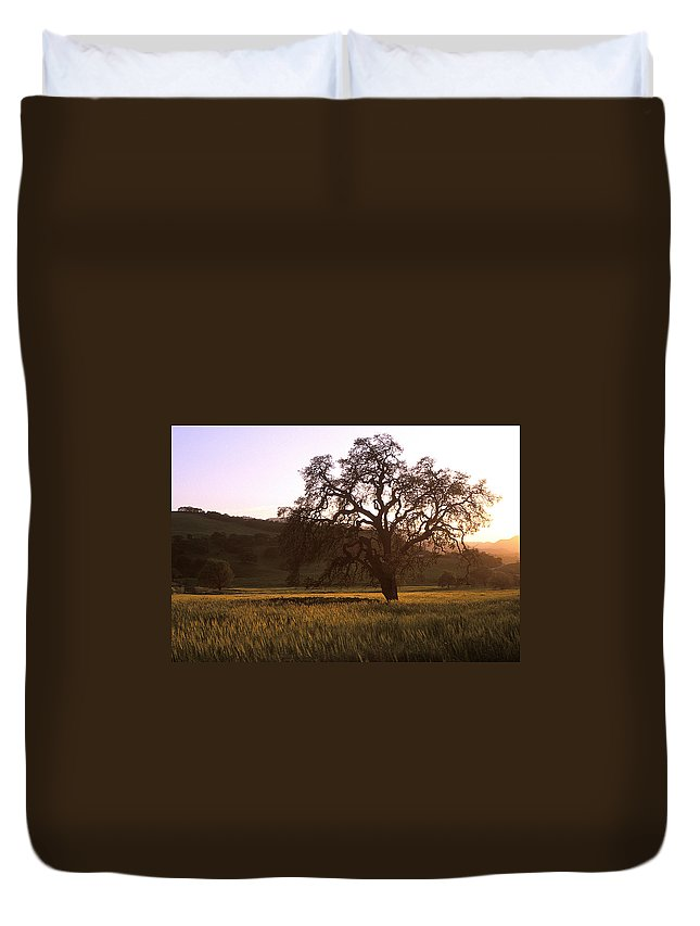 Oak Trees Duvet Cover featuring the photograph California Hwy 25 Oak by Kathy Yates