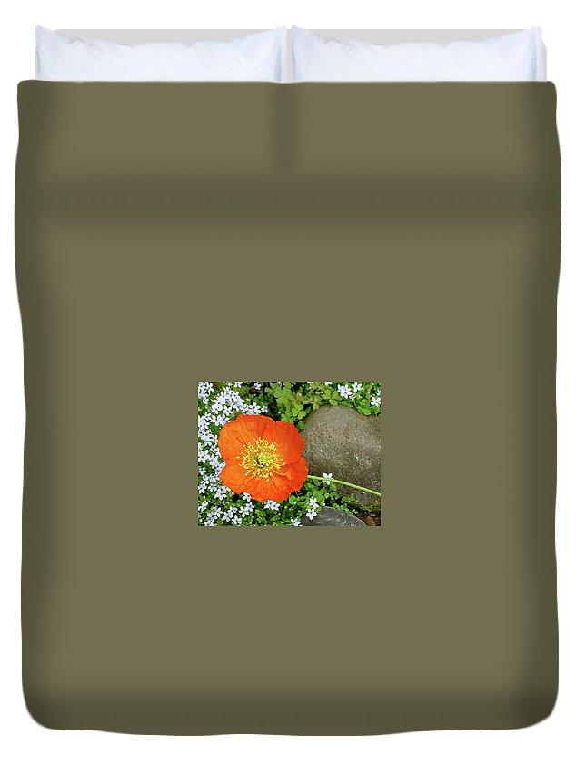Star Duvet Cover featuring the photograph California Poppy Rock Garden by Shirley Heyn