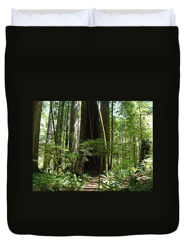 Redwood Duvet Cover featuring the photograph California Redwood Trees Forest Art by Baslee Troutman