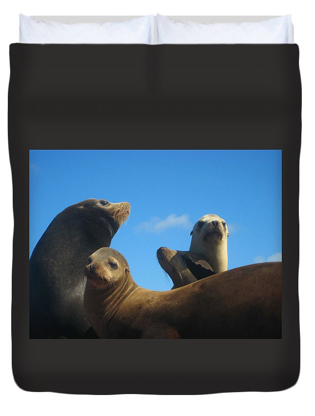Wildlife Duvet Cover featuring the photograph California Sea Lions Resting by Andrea Freeman