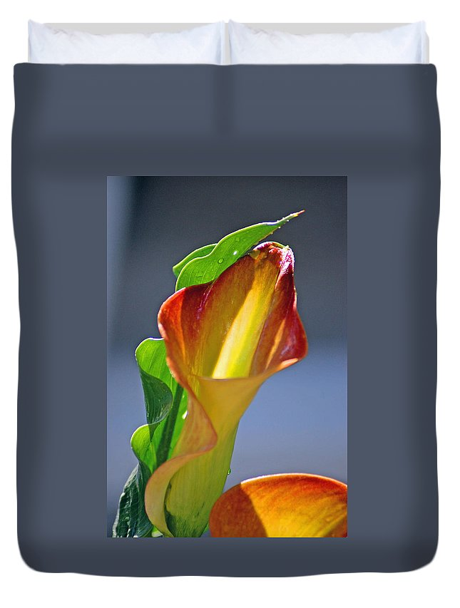 Flowers Duvet Cover featuring the photograph Calla Lilies by Donna Bentley