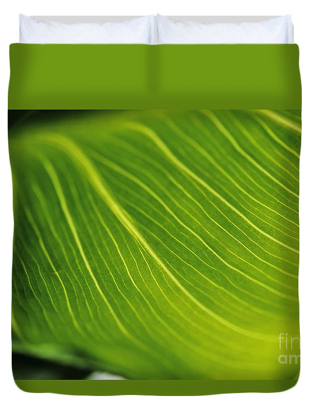 82-csb0004 Duvet Cover featuring the photograph Calla Lily Leaf by Larry Dale Gordon - Printscapes