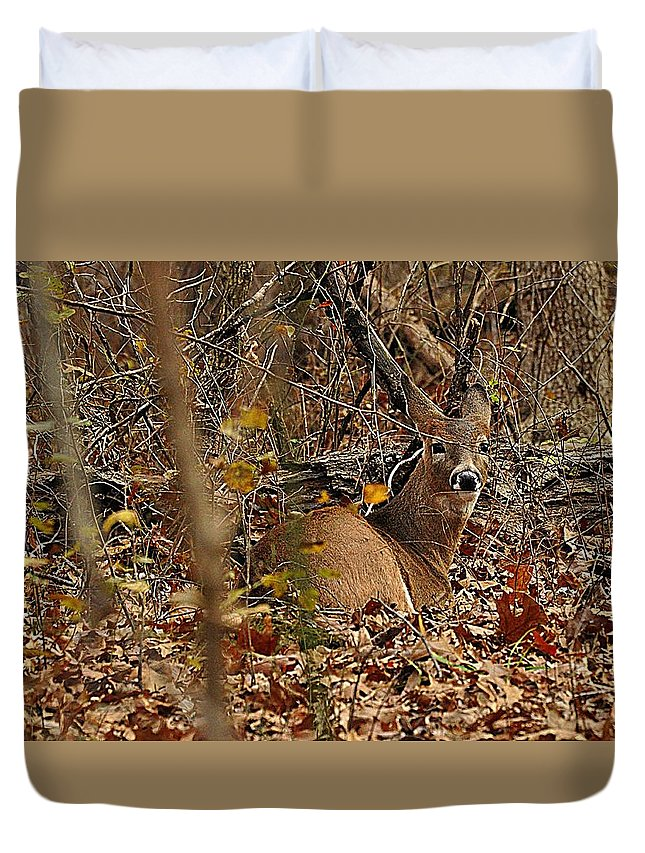 Whitetail Duvet Cover featuring the photograph Camouflage by Diana Cannon