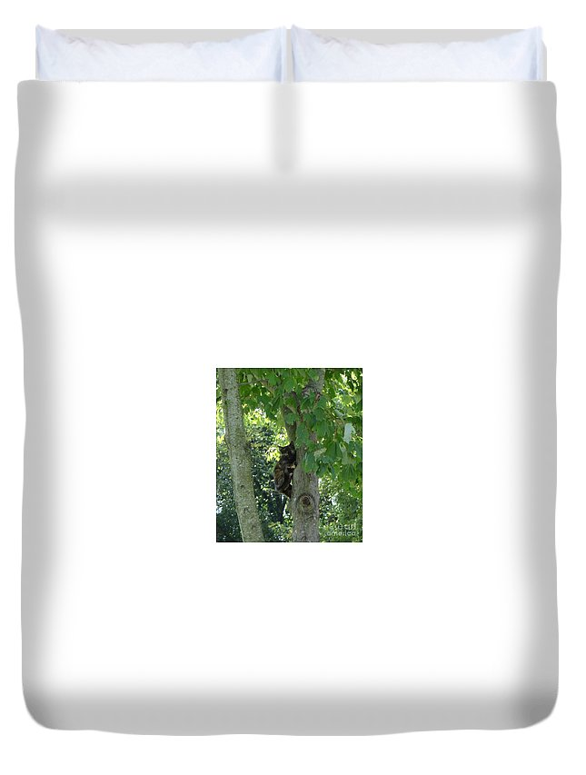 Kitten Duvet Cover featuring the photograph Camouflaged Kitty by Deb Rassel