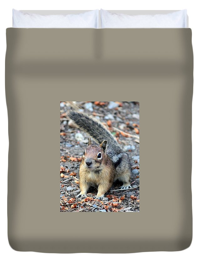 Chipmunk Duvet Cover featuring the photograph Campground Chipmunk by Carol Groenen
