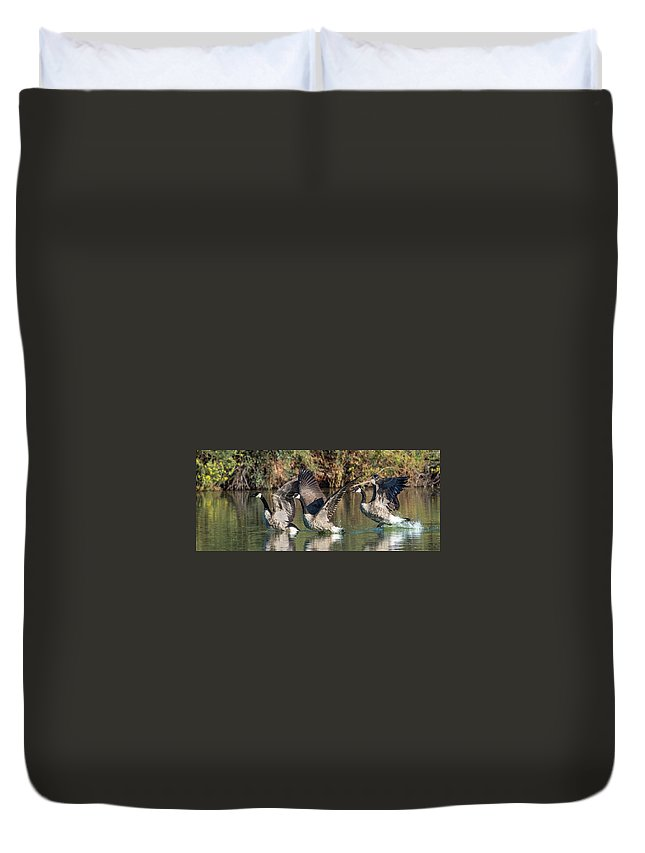 Canada Duvet Cover featuring the photograph Canada Geese 5659-092217-1cr-p by Tam Ryan