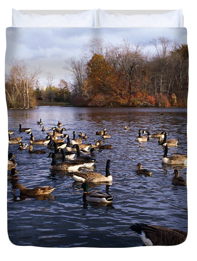 Photography Duvet Cover featuring the photograph Canada Geese Branta Canadensis by Panoramic Images