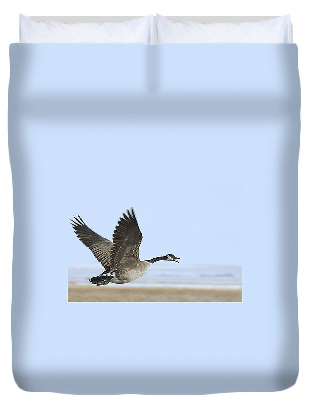 Goose Duvet Cover featuring the photograph Canada Goose by Gary Beeler
