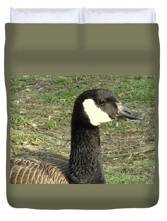 Canada Duvet Cover featuring the photograph Canada Goose by Ian MacDonald
