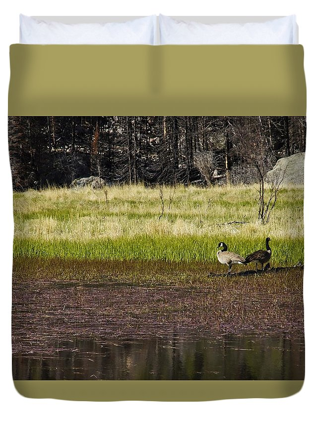 Canadian Geese Duvet Cover featuring the photograph Canadian Geese by Brian Kamprath