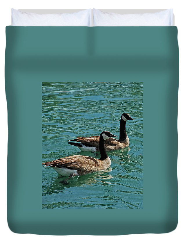 Geese Duvet Cover featuring the photograph Canadian Geese by Carol Eliassen