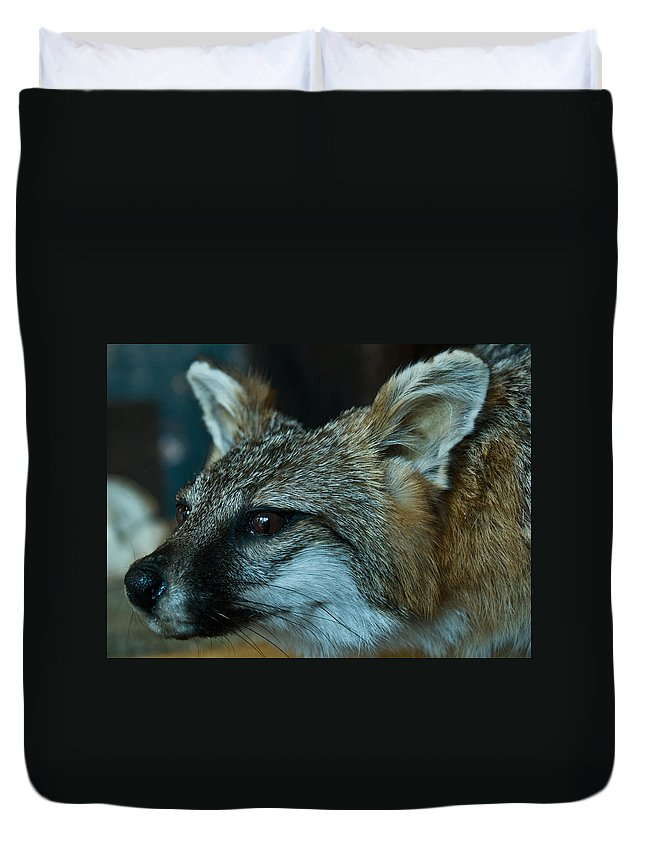 Canis Duvet Cover featuring the photograph Canis Species by Douglas Barnett