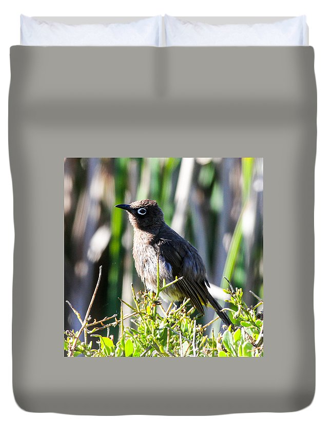 Cape Bulbul Duvet Cover featuring the photograph Cape Bulbul by Dave Whited
