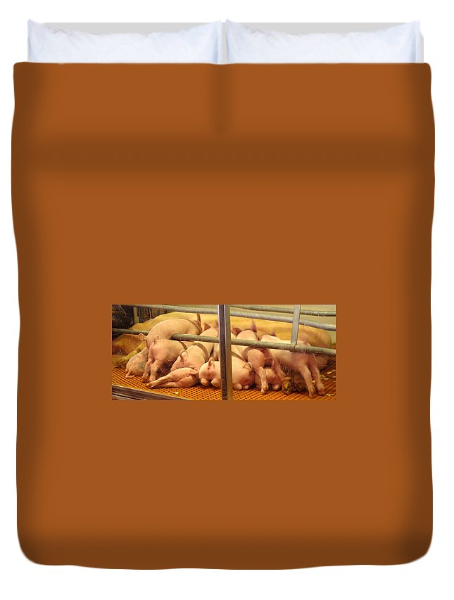 Pig Duvet Cover featuring the photograph Capitalist Swine by Ian MacDonald