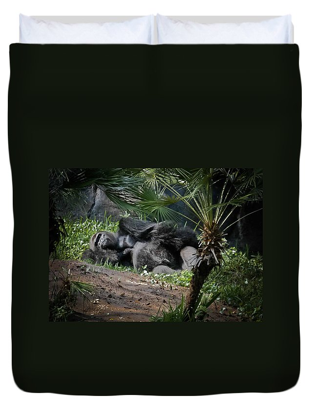 Gorilla Duvet Cover featuring the digital art Captivity Is Heartbreaking by DigiArt Diaries by Vicky B Fuller