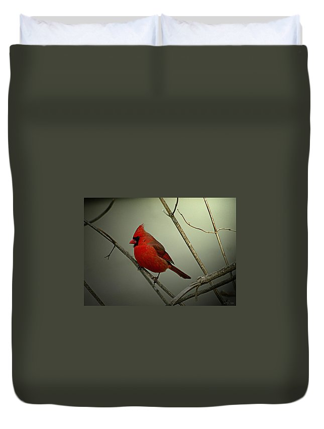 Jenny Gandert Duvet Cover featuring the photograph Cardinal And The Setting Sun by Jenny Gandert