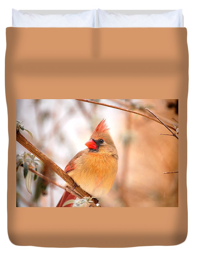 Landscape Duvet Cover featuring the photograph Cardinal Bird Female by Peggy Franz